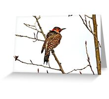Northern Flicker Greeting Card