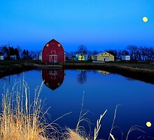 Barnyard Reflections by Larry Trupp