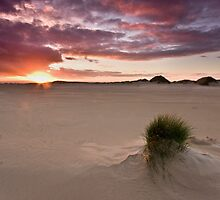 Afternoon Dunes by Alistair Wilson