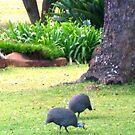 Guinea Fowl & Strelitzia by kate conway