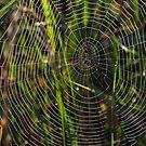 Green cobwebs by Vikki Shedden Photography