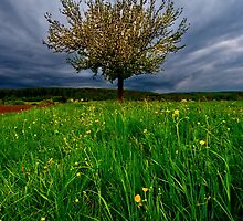Blooming tree under strom clouds Germany by JEPhotography