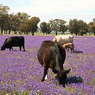 Field of Purple by julie anne  grattan
