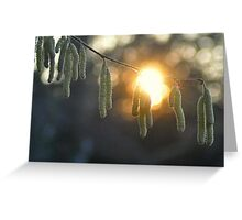 Catkin Sunset at Pipes Place Greeting Card