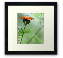 Orange Hawkweed and Wood Fern Framed Print