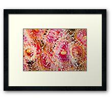 Jewel Anemonies Framed Print