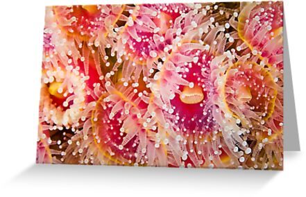 Jewel Anemonies by MattTworkowski