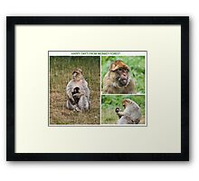 Wish you where here Monkey Forest Framed Print