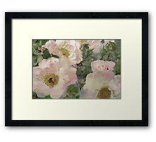Roses, Roses, Roses. Framed Print