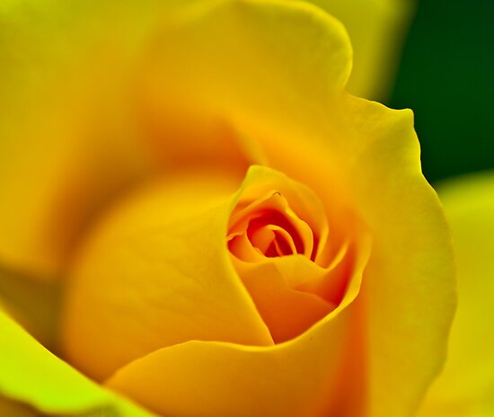 Yellow  by Bernie Rosser