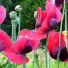 Poppyland.............................Most Products by Fara