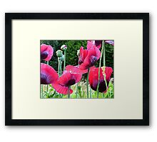 Poppyland.............................Most Products Framed Print