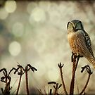 Convenient Perch by Heather King