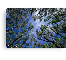 Looking up through the canopy Canvas Print
