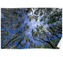 Looking up through the canopy Poster