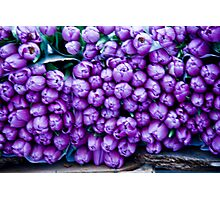 A Crush Of Tulips Photographic Print