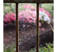 spider web- garden gate Photographic Print