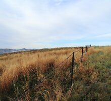 Barbed Wire Fence - Mt Parnassus by Keenan Beaumont