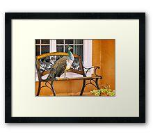 Fine Feathered Neighbor Framed Print