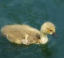 I'm Not an Ugly Duckling!! by Sandra Cockayne