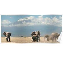 Elephants and Mount Kilimanjaro Poster