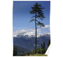 Overlooking Stubaier Alps  Poster