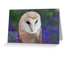 The Barn Owl, Tyto alba Greeting Card
