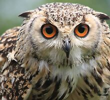 The Eurasian Eagle-owl, Bubo bubo by DutchLumix