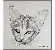 Meow Photographic Print