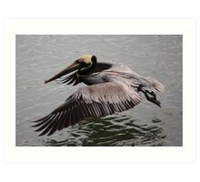 Pelican flying close to the Water Art Print