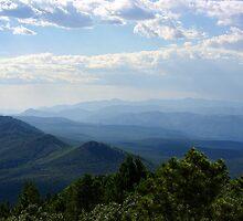 Gila National Forest ~ New Mexico USA by Vicki Pelham
