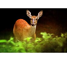 Doe Eyes Photographic Print