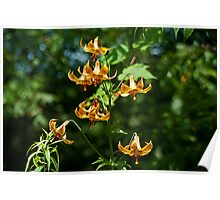 Canada Lilies Poster