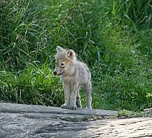 Hey!!! Where did everyone go? by Tracey  Dryka