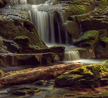SUMMER PARADISE by Sandy Stewart