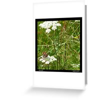 Butterfly - River Derwent Footpath Greeting Card
