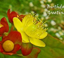 Hypericum Greetings by sarnia2