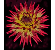 ANOTHER NATURAL FLARE Photographic Print