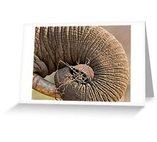 Elephant Pattern Greeting Card