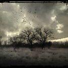 Til the break of dawn by Nicola Smith