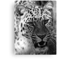 Wild Cat - Wildlife Heritage Foundation Canvas Print