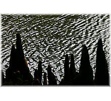 Swamp Stumps-Edisto Memorial Garden Photographic Print