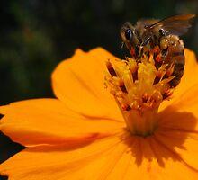 Bees Knees by L.D. Bonner