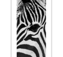 Zebra print series. Sticker