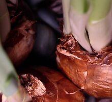 Paperwhite Beginings by croakingfrog