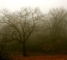 Foggy Day on Altamont by Virginia Kelser Jones