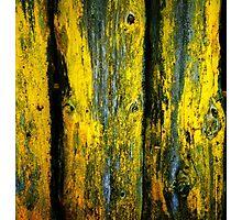 patina Photographic Print