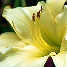 Lily #6 by Mattie Bryant