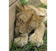 cub Photographic Print