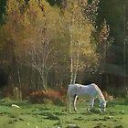 Rural Autumn Pasture Beauty by Deborah  Benoit